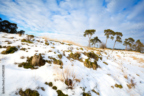 pine trees on snowy hill