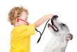 boy listens to puppy through a stethoscope. isolated