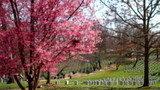 Arlington National Cemetery cherry blossom tilt shift