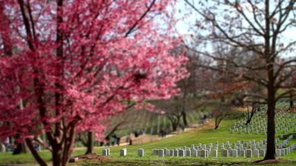 Arlington National Cemetery cherry blossom tilt shift