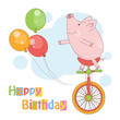 Cute little pig on circus bicycle.