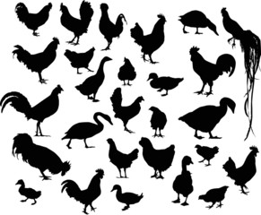 twenty seven black farm birds