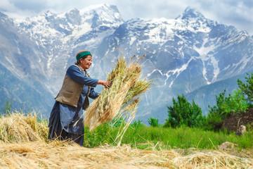 Agricultural time © 2xSamara.com