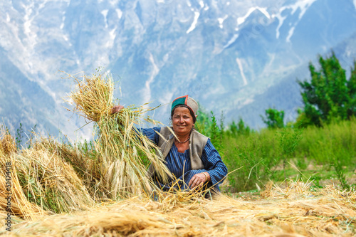 Woman drying wheat