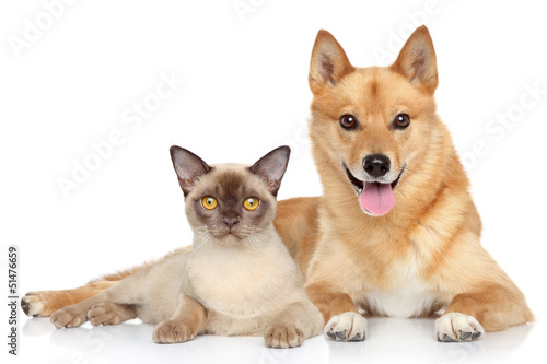 Happy dog and cat together
