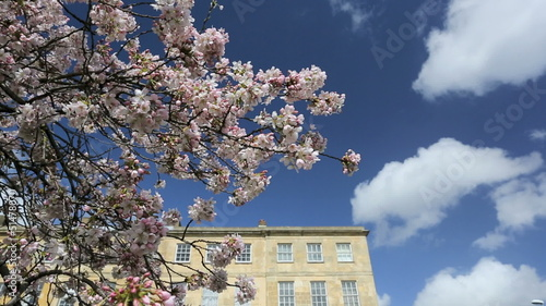 Cherry Blossom Swaying in Cloudy Blue Sky