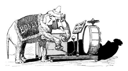 Circus Elephant : Musician