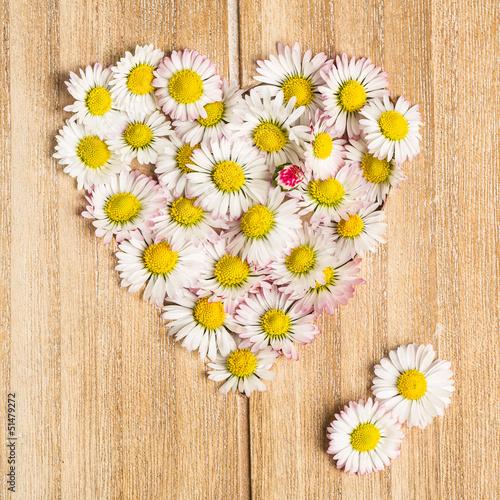 Gänseblümchen (Bellis perennis) Herz aus Blüten auf  Holz