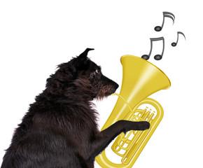 talentierter Hund
