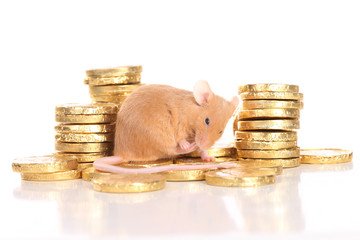 Farbmaus auf Goldmünzen - mouse with gold coins