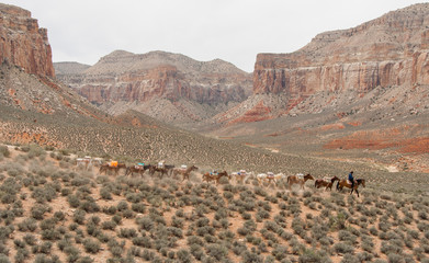 Convoy in the Grand Canyon
