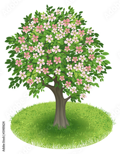 Blossoms Tree in green field