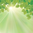 Vector of green leaves on sunny sky background.