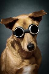 Mischlingshund im Studio