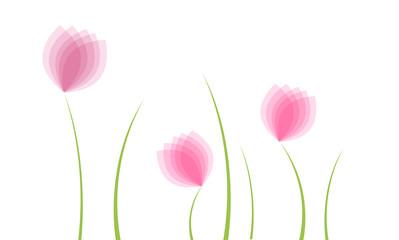Tulipanes en un prado.