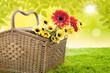 Flower of spring