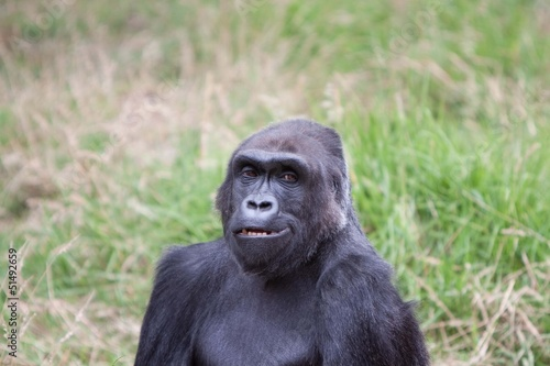 Happy Gorilla