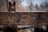 Winter Day in the Horse Corral