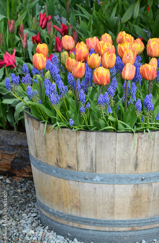 Orange tulip planter