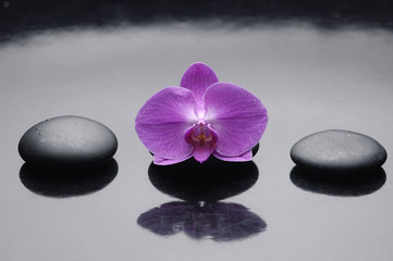 Zen rock and pink orchid