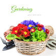 Colorful flowers in wicker basket