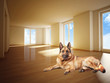german sheperd on wood floor