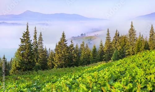 panorama-letnich-karpat-wies-gorskich