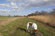 canal towpath with dog