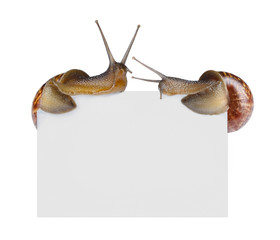 Snails on empty poster