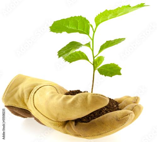 Tuinposter Bonsai arbre à protéger