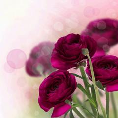 Dismissed claret roses