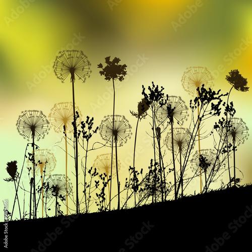 Zdjęcia na płótnie, fototapety na wymiar, obrazy na ścianę : Floral background with dandelion