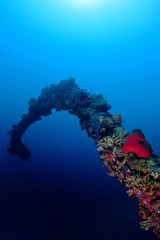 Red Sea corals and fish on the blue background