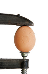 Egg in clamp (isolated)
