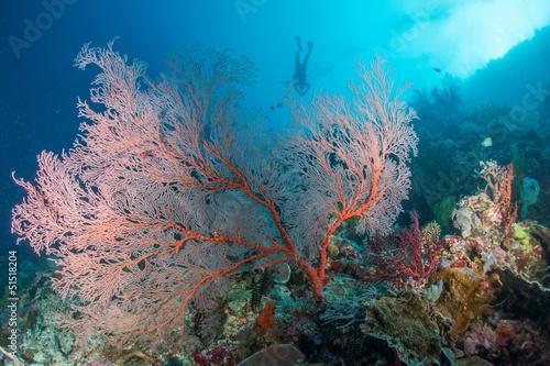 Tuinposter Koraalriffen pink sea fan scuba diver