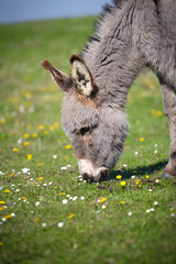 A donkey standing in a pasture.