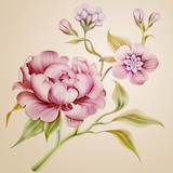 vintage peony spring flowers and leaves isolated - 51524461