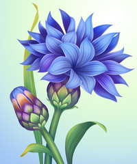 illustration of cornflower with green leaves isolated