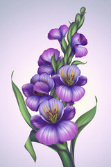 creative fantasy violet flower illustration
