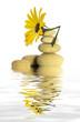 yellow stones and daisy