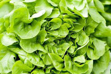 Frischer Kopfsalat Blattsalat nahaufnahme an einem Marktstand