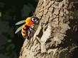 Obrazy na płótnie, fototapety, zdjęcia, fotoobrazy drukowane : bee on tree