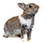 little baby rabbit on a white background