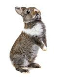 little baby rabbit - Fine Art prints