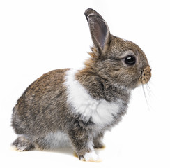 a little baby rabbit on a white background