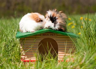 deux cobayes sur une maison