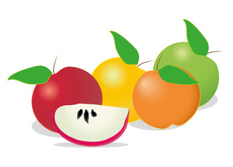 Colorful apples on white background, vector illustration