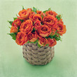Bouquet of orange roses on green background
