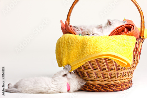 many little kittens, towels and basket