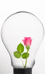 Rose inside light bulb